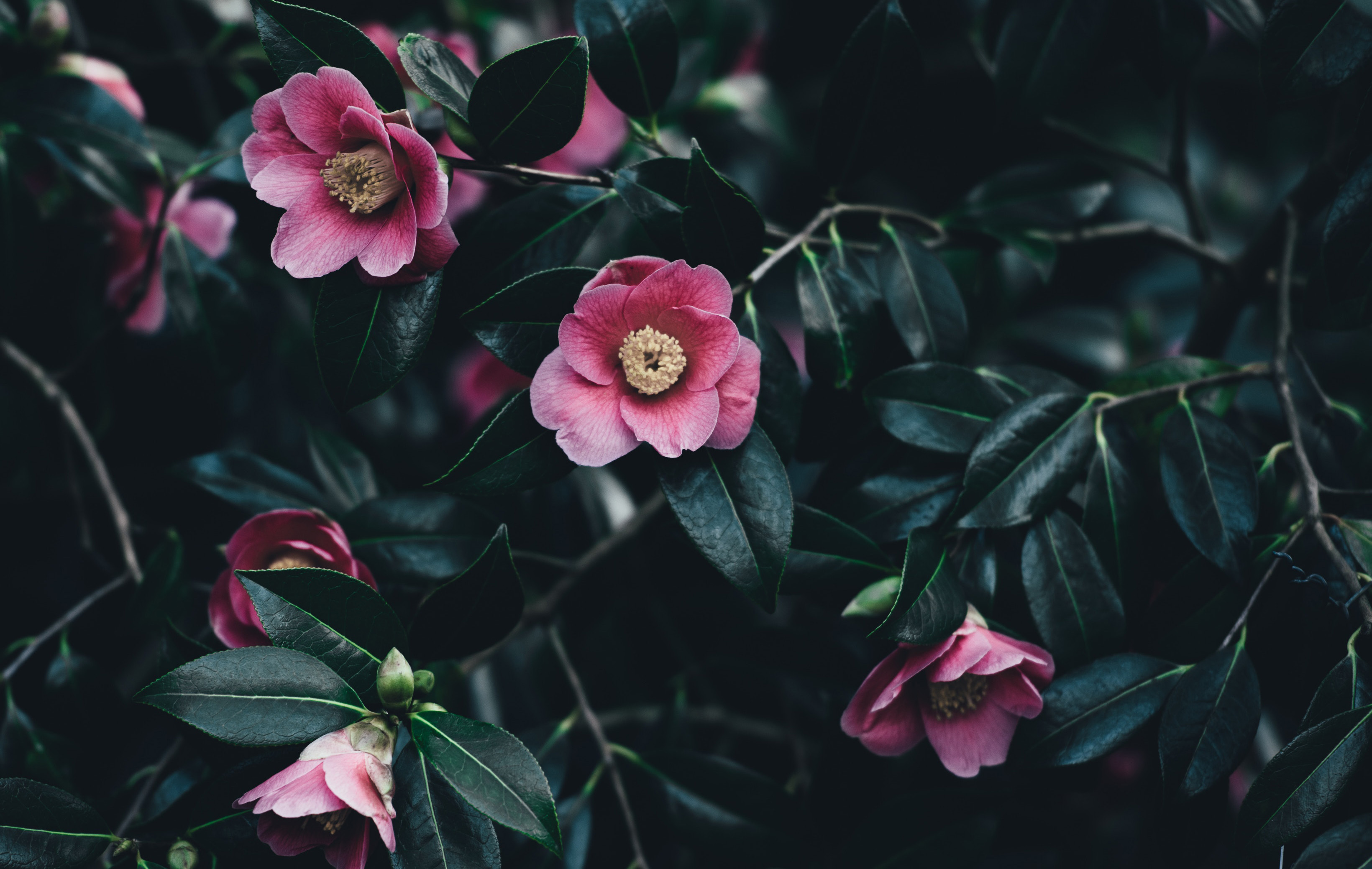 Photo by Annie Spratt on Unsplash